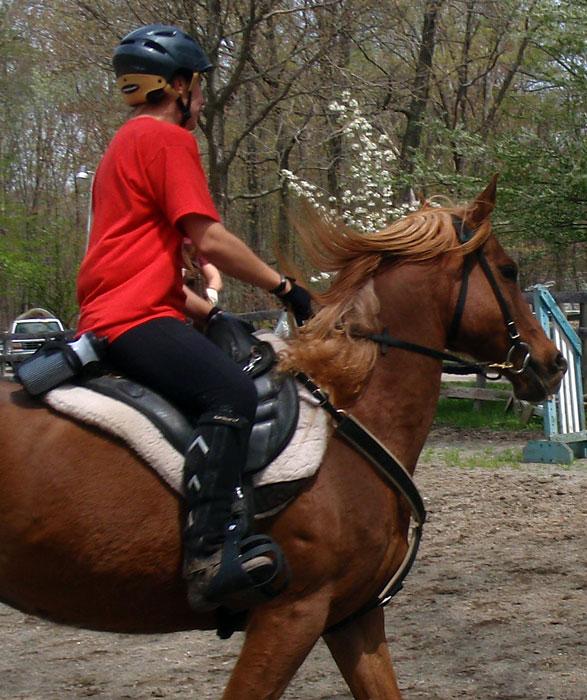 Endurance saddles - Page 2 - The Horse Forum